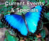 Current Events & Specials